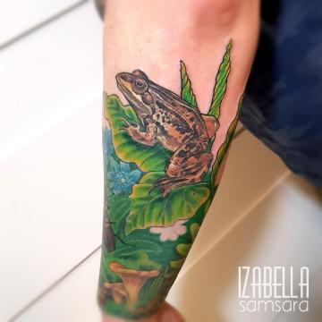 Żaba frog