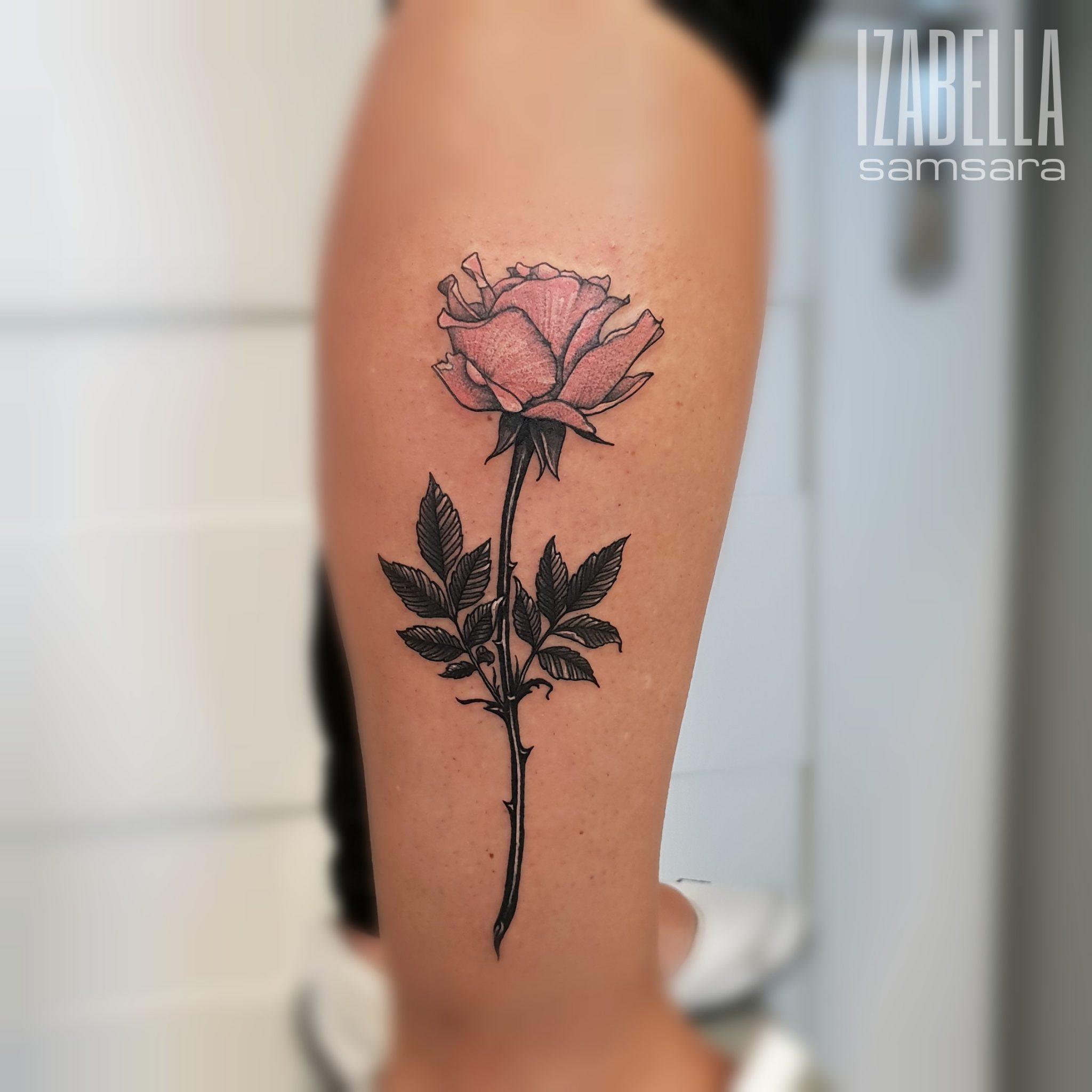 rose flower kwiat róża