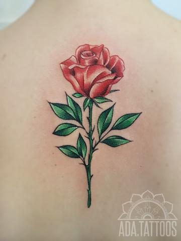 roza na plecach rosa back