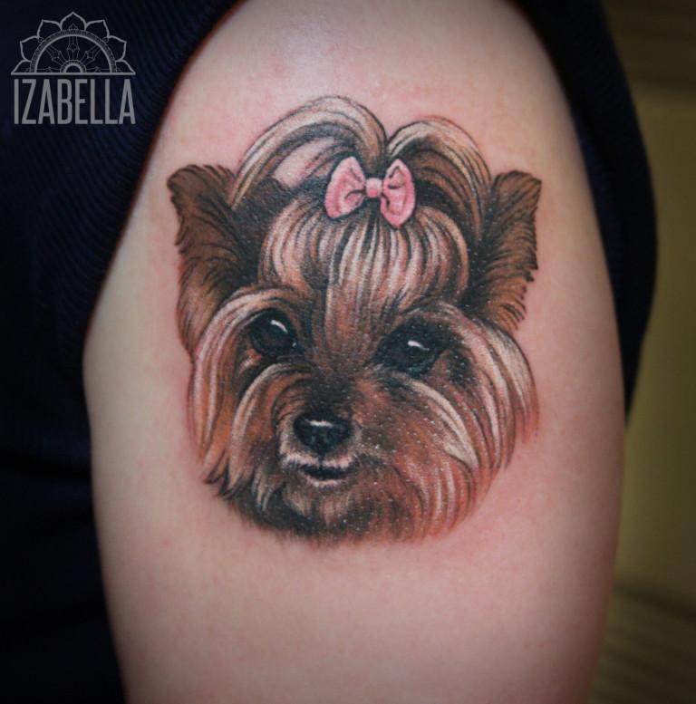 buffy1 pies dog