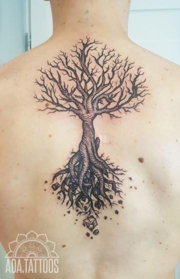 drzewo tree