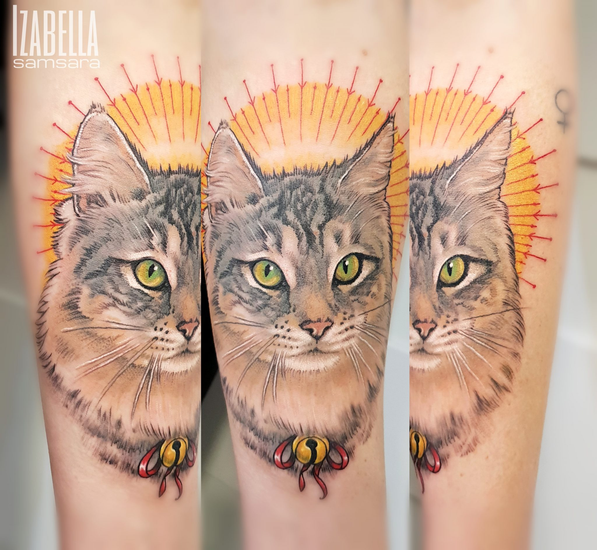cat kot