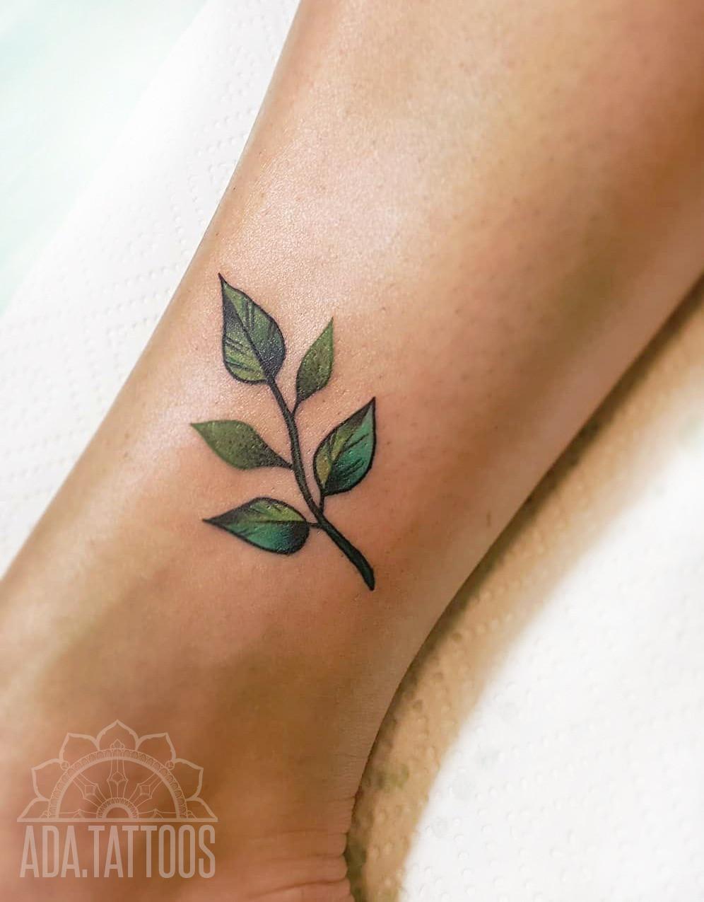 roślina plant liście leafs