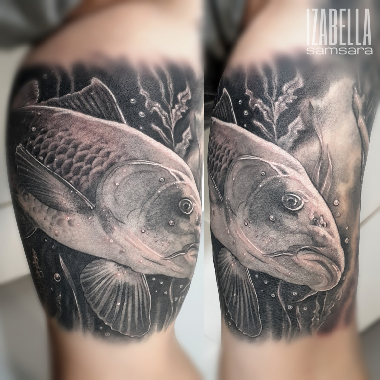 ryba sum fish catfish