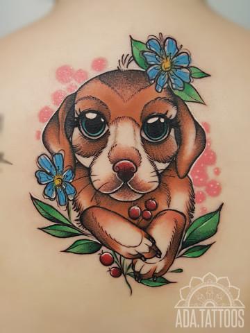 pies piesio dog doggy