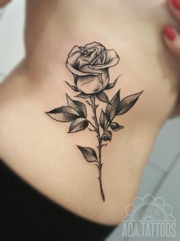 roza rose