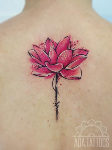 rozowy lotos pink lotos